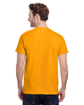 Gold Classic Cotton T as seen from the back